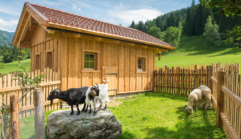 Streichelzoo & Tiere, 4 Sterne Hotel Taxerhof in Radstadt