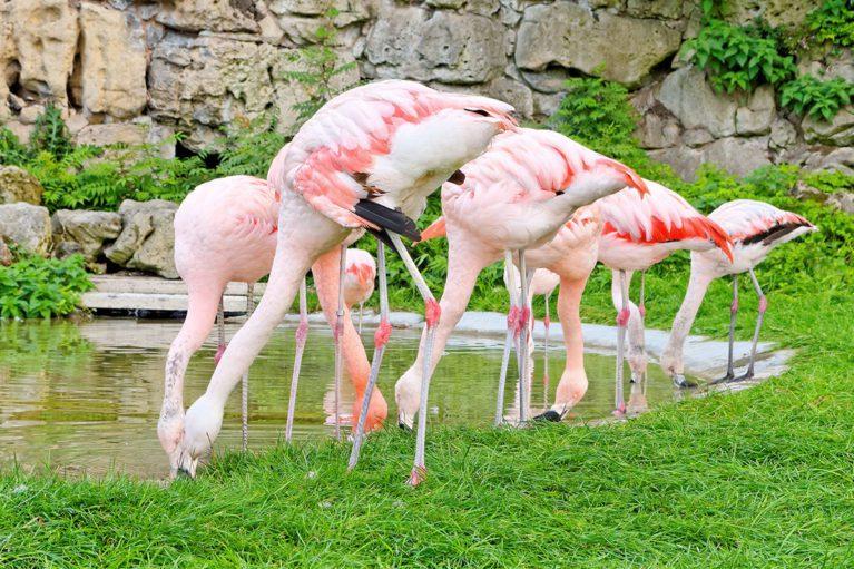 Zoo Salzburg - Ausflugsziel